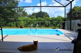That Cat hanging out by the pool