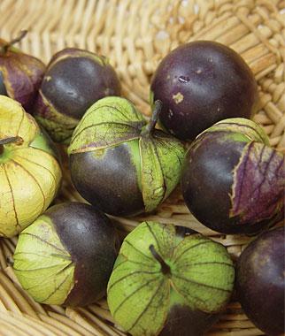 purple tomatillo