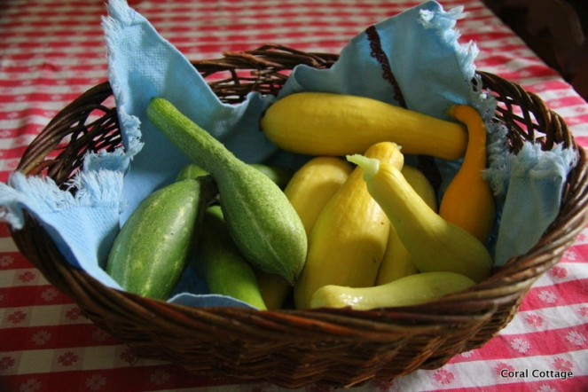 Squash and cukes