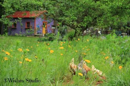 Chickens in Wildflowers
