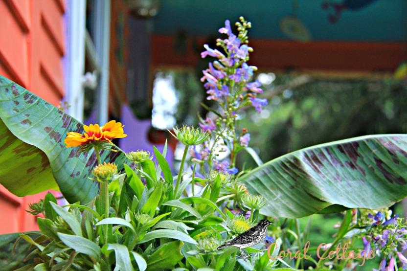 banna plant with bird