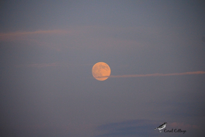 carysbrook moon2