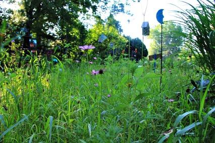 wildflower garden