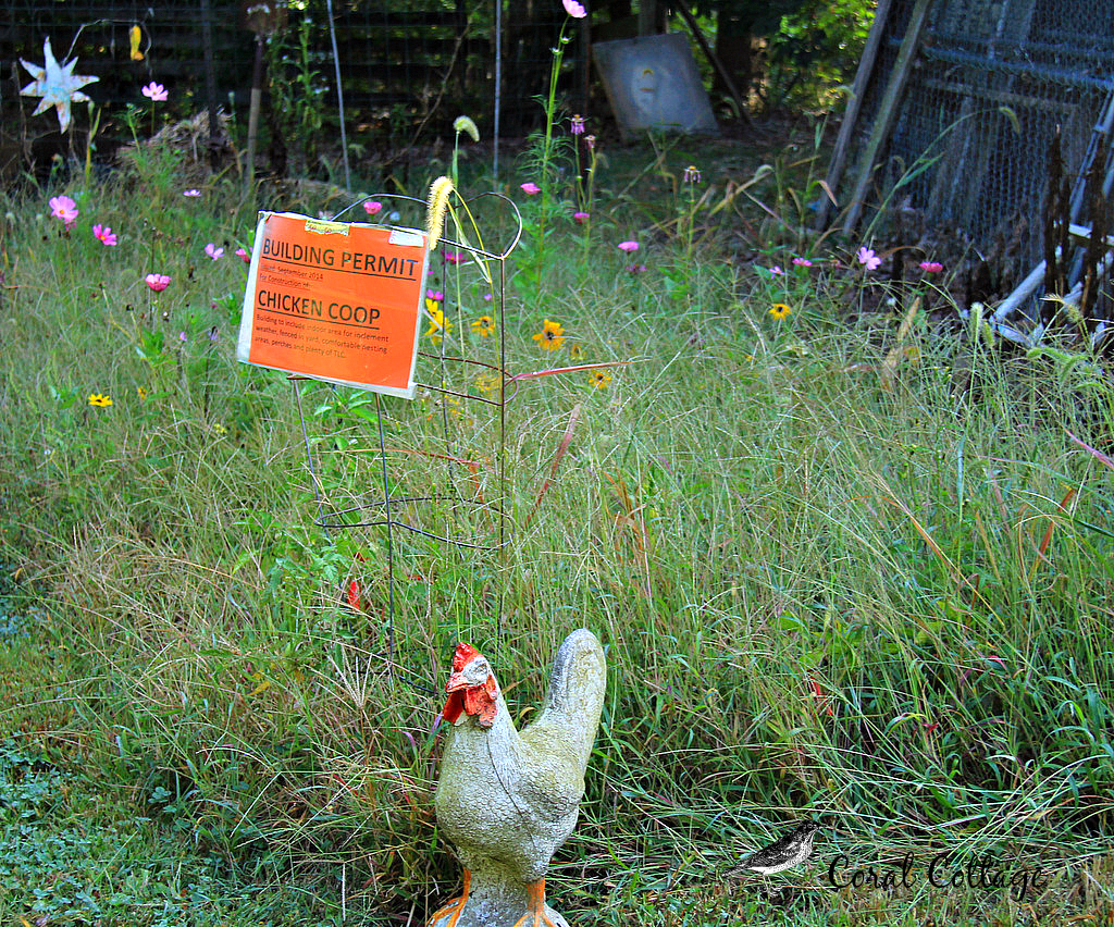 chicken building permit