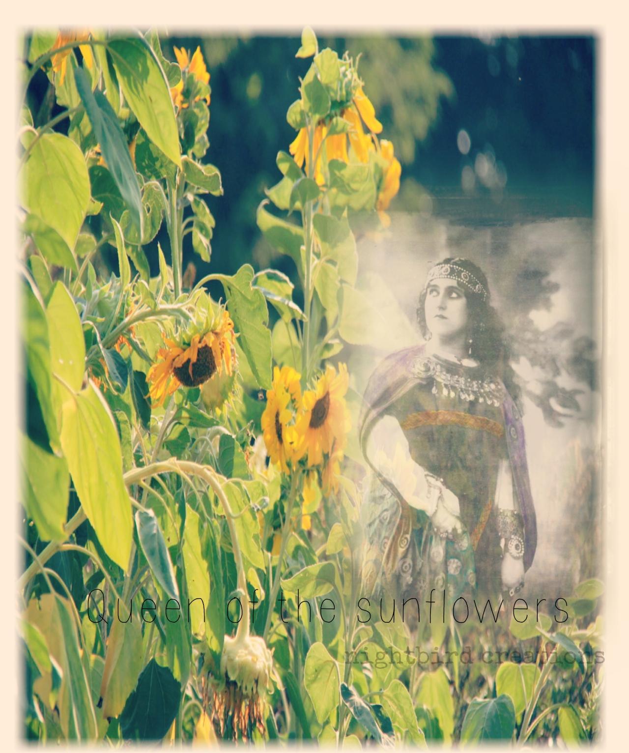 queen of the sunflowers wm