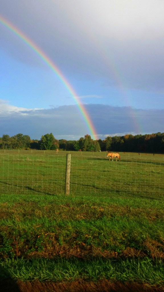 rainbow horse 2