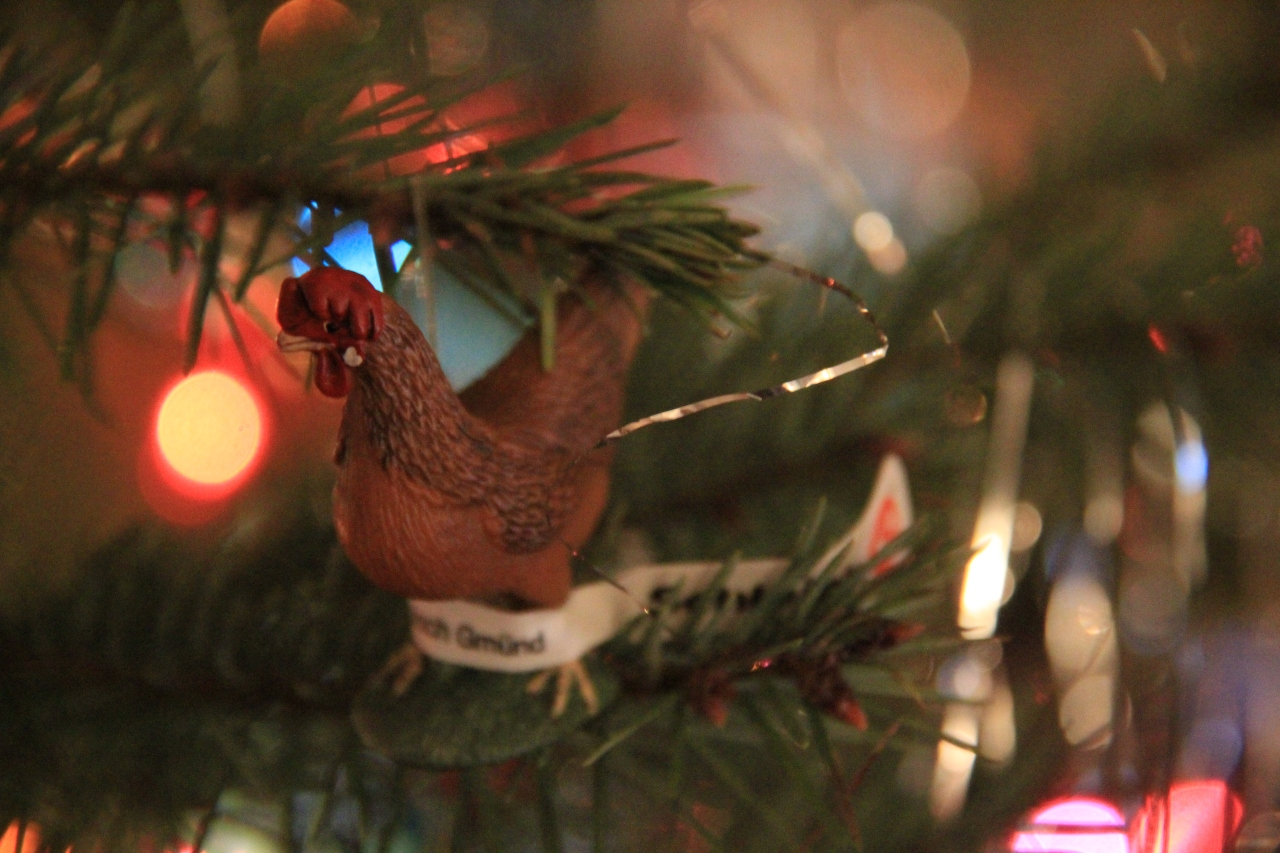 chicken in a tree