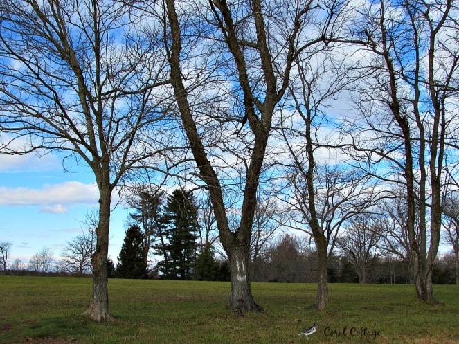 smiling tree 2