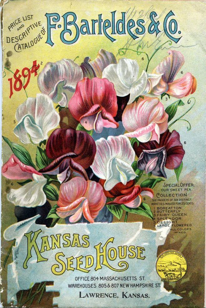 vintage seed catalog 1894