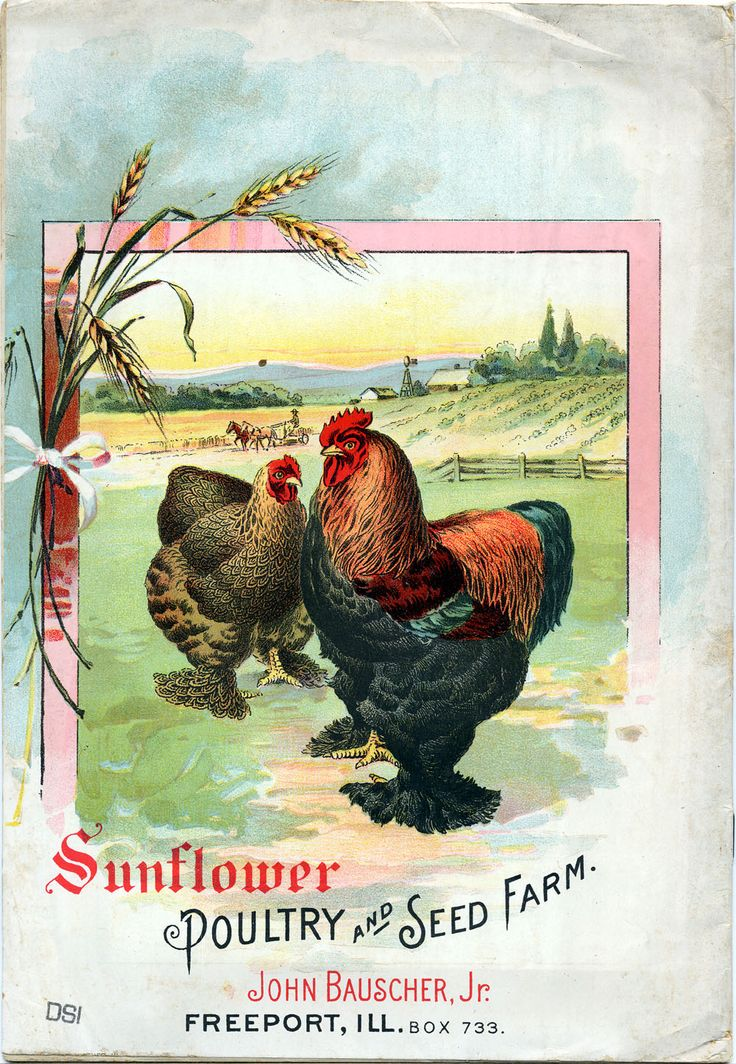 vintage seed catalog sunflower poultry
