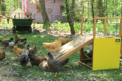 chicks on slide 1