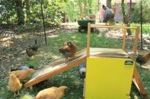 chicks on slide 2