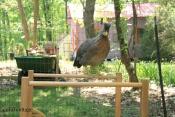 chicks on slide 3
