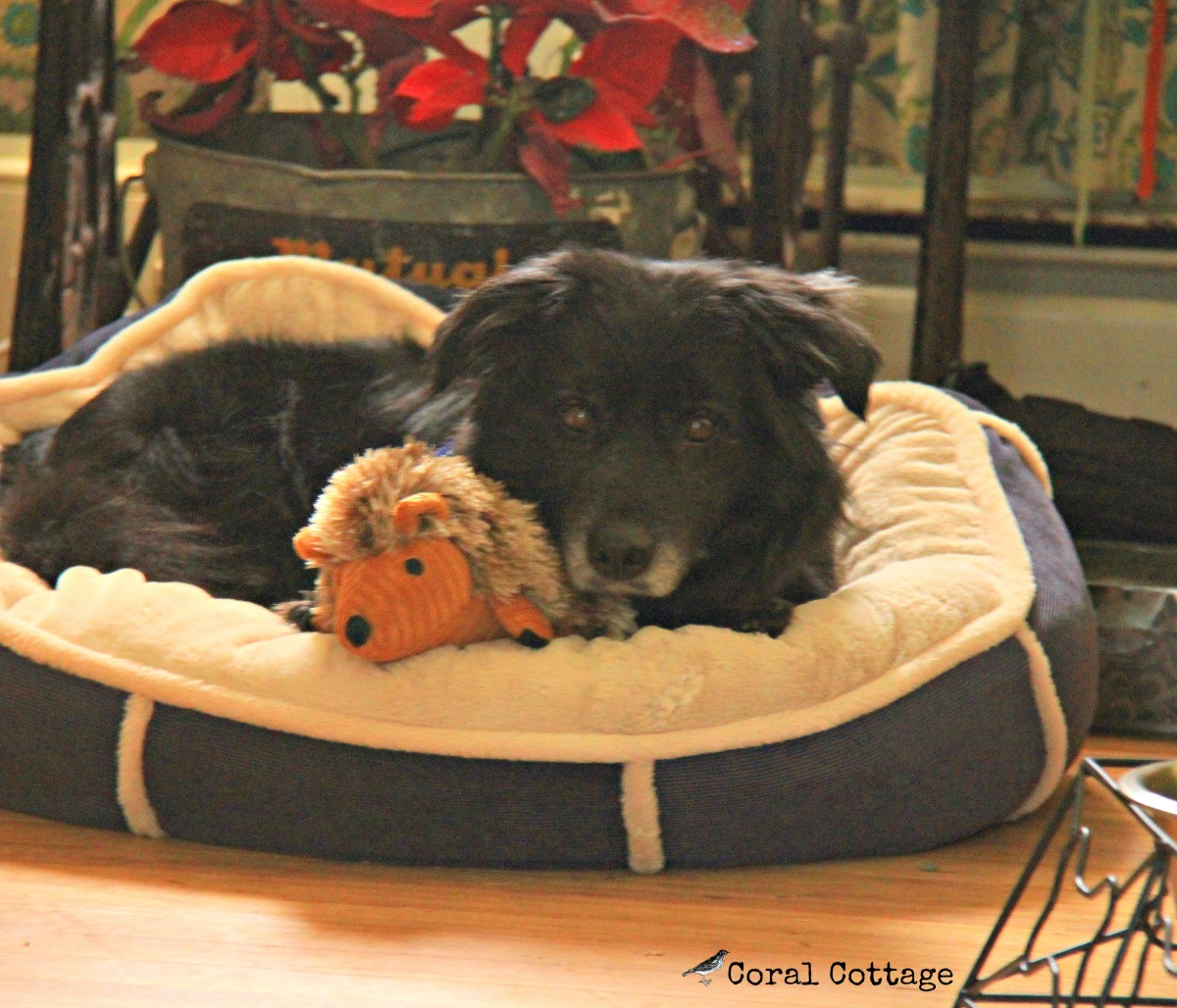 rescue dogs come to the cottage – Red Dirt Farm