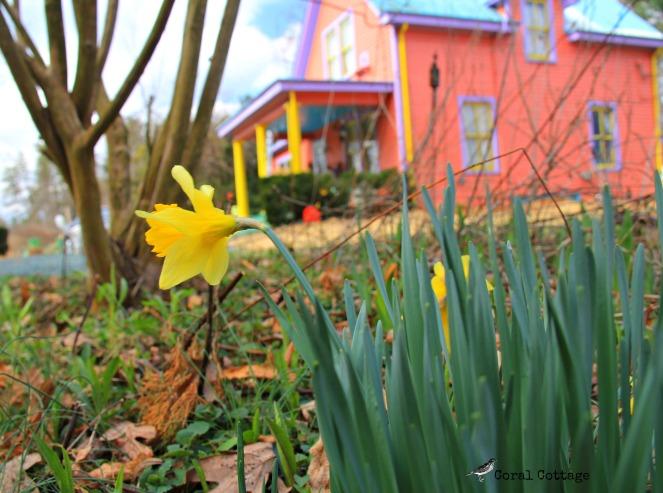 coral cottage spring