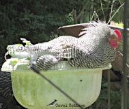 Stanley in a flower pot