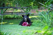 bear 7