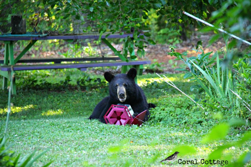 a bear in our yard