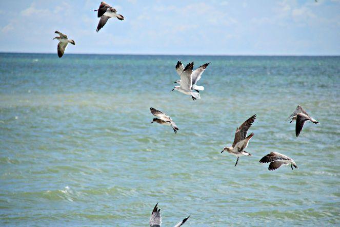 Gulls at the causeway