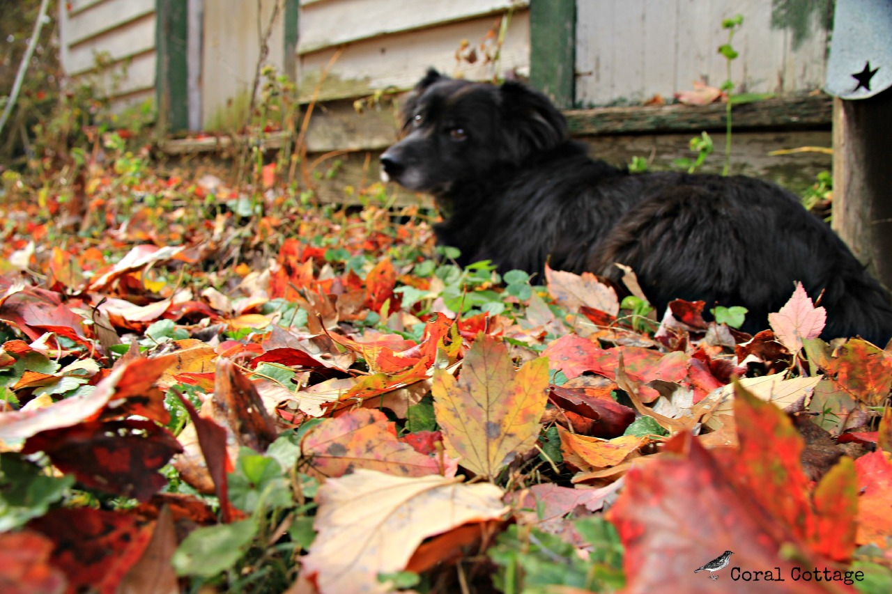 boo in fall leaves