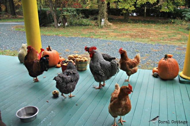 chickens on the porch