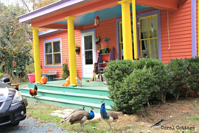 coral cottage peacocks