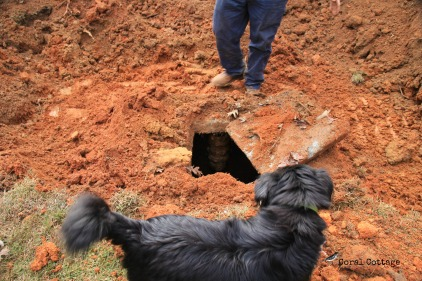 Opening the cover of the old septic system