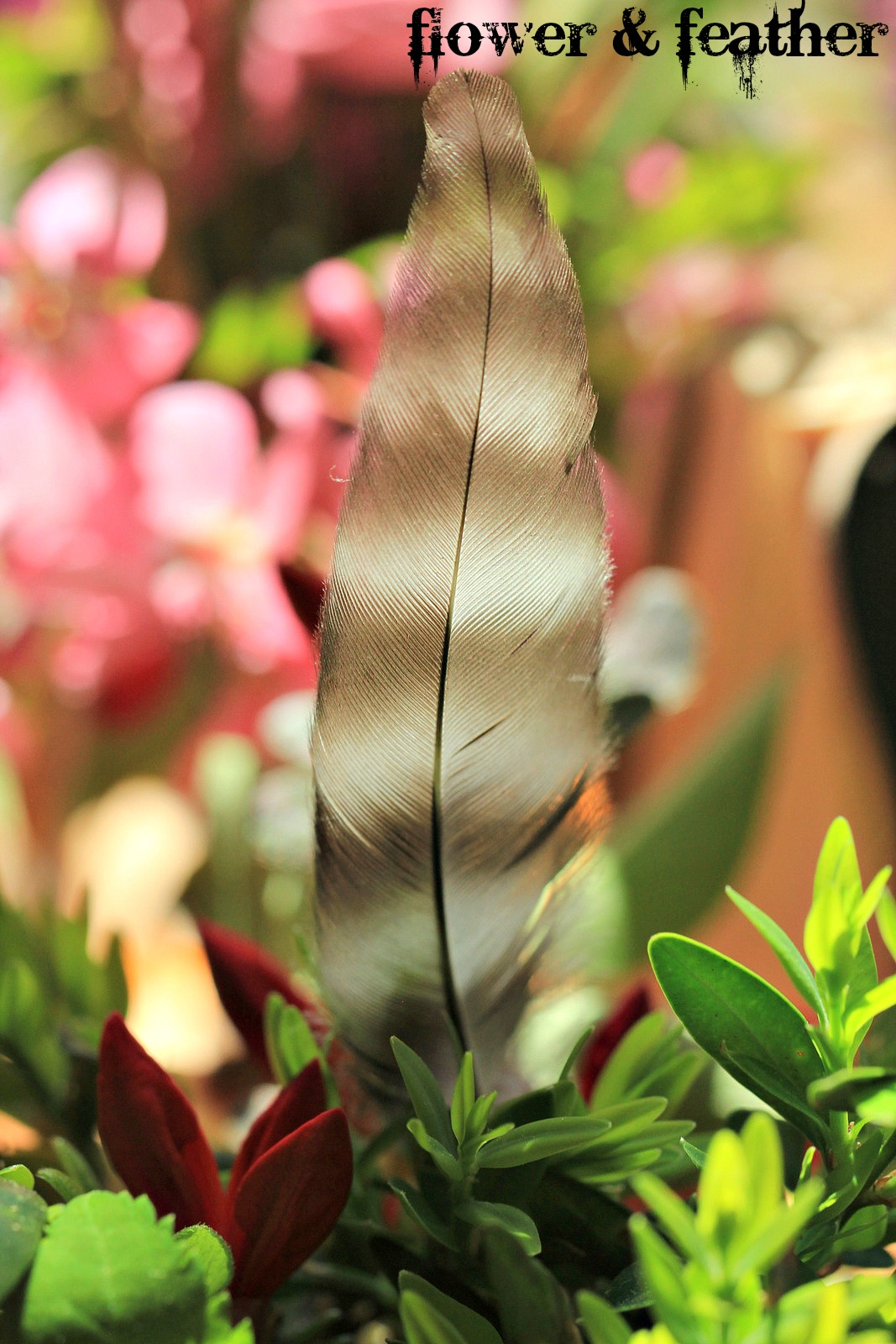flower and feather 1