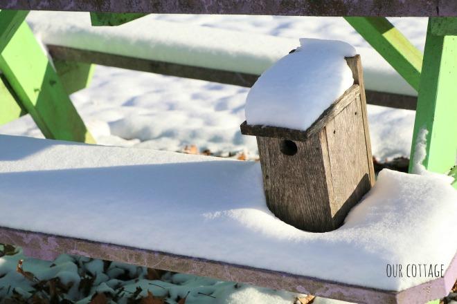 bird-house-on-picnic-table