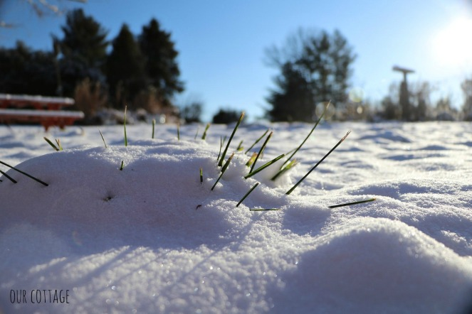 grass-poking-through-snow