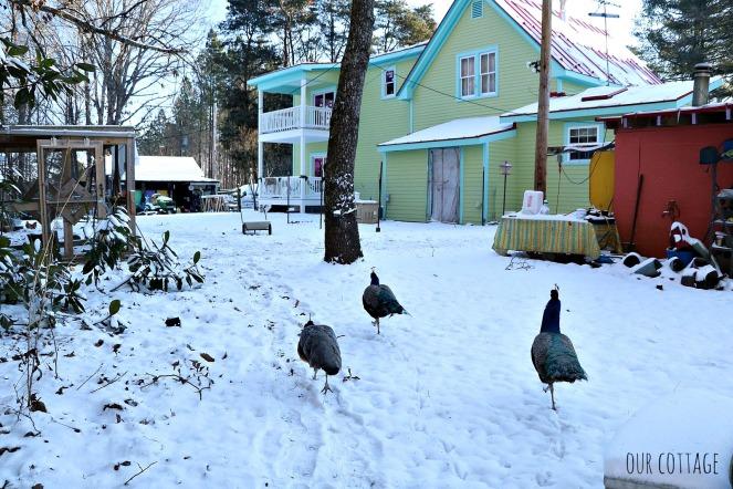 kooky-birds