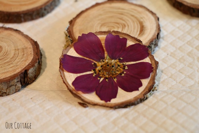 pressed-flowers-2