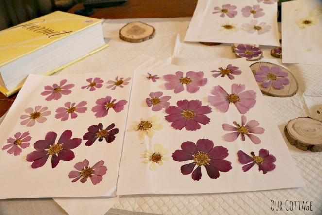 pressed-flowers-4