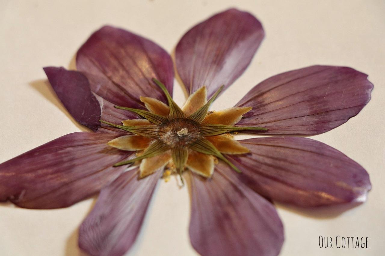 pressed-flowers-5