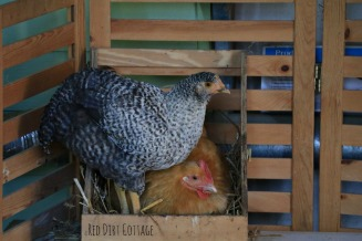 daisy-and-winter-in-the-nesting-box