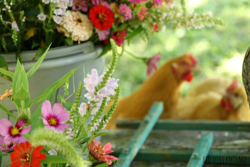 chickens help arrange flowers