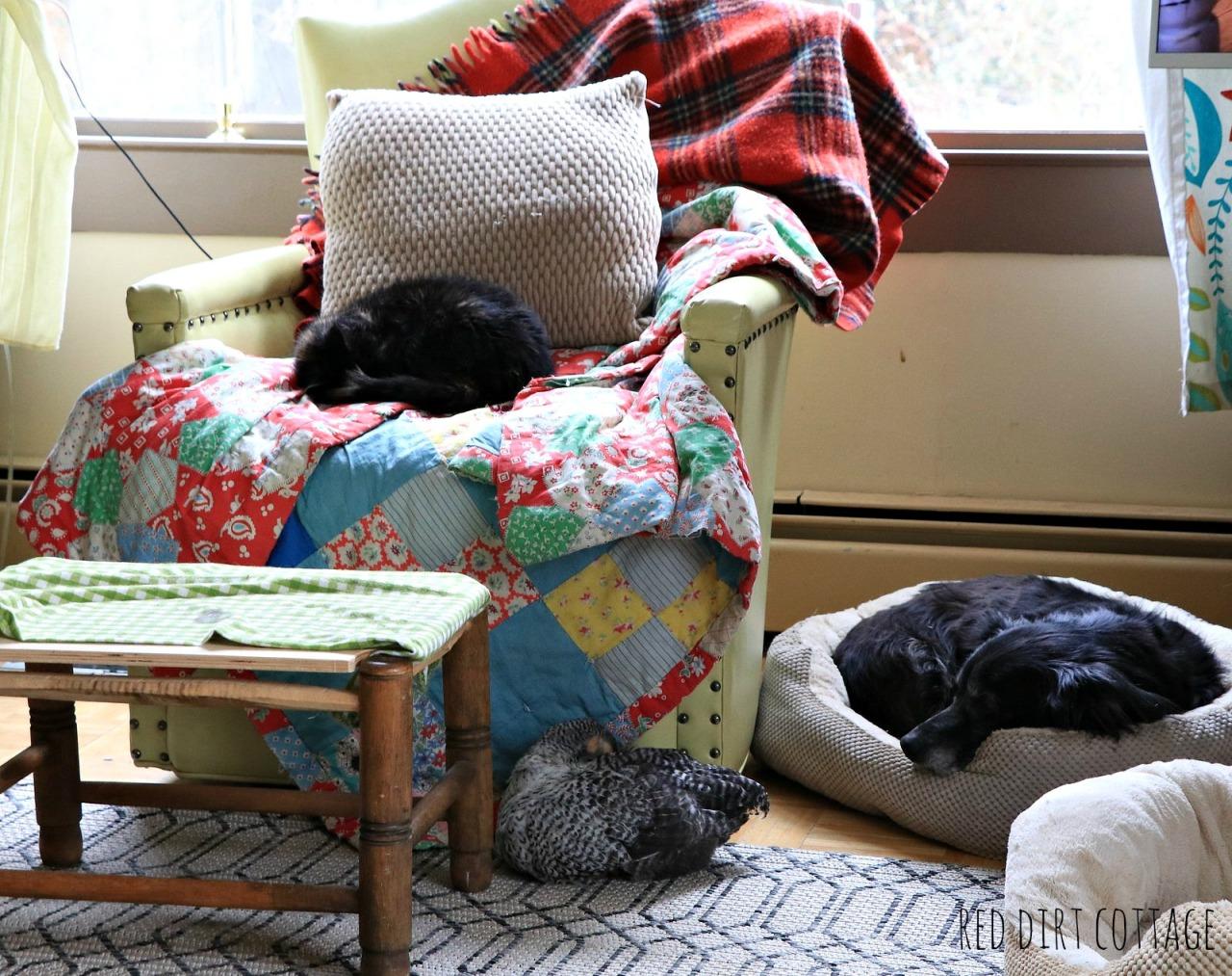 sleeping-pets