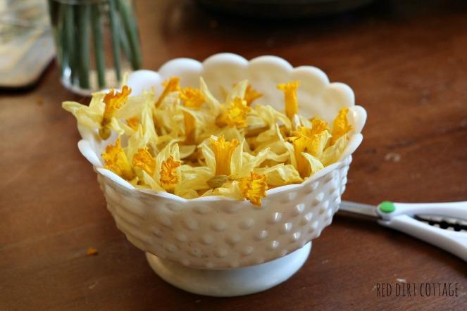 dried-daffodils