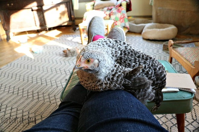 winter-on-my-lap