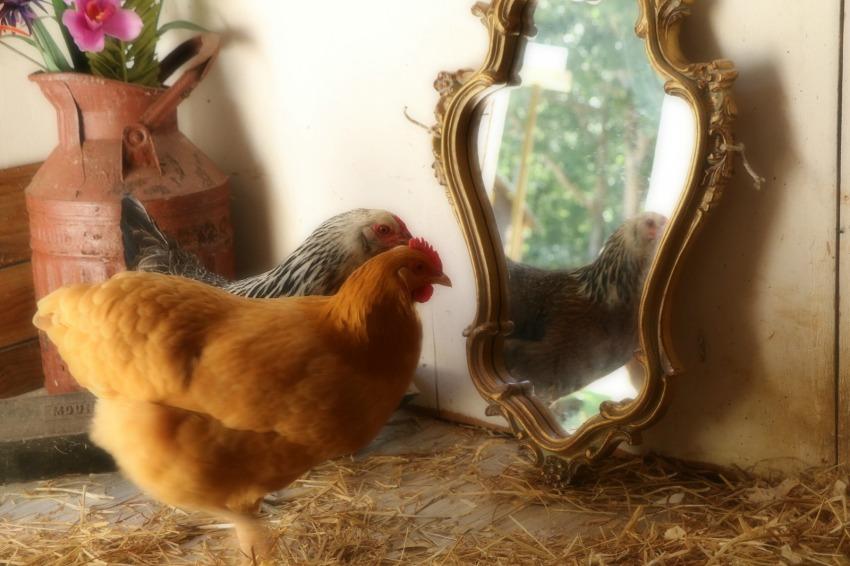 nc mirror mirror