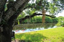 under the mahagony tree