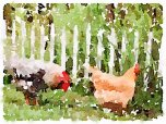Chickens at fence 2