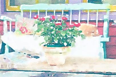 Geraniums on front porch