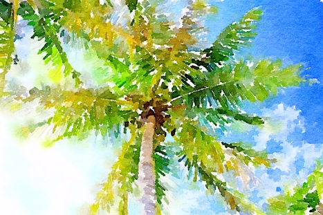 Palm Tree in Florida