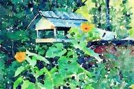 Sunflower and birdfeeder