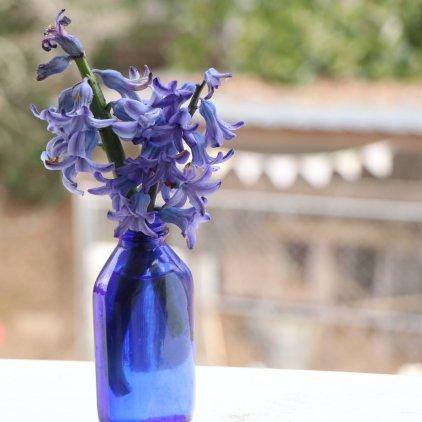 Phillips bottle