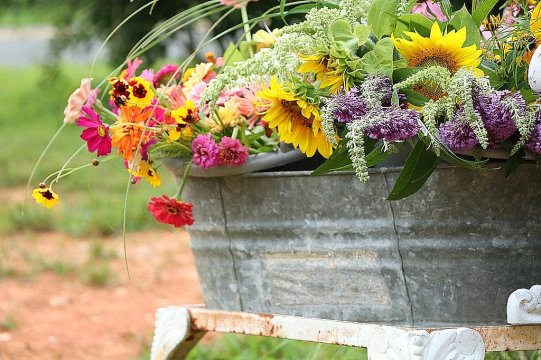 Fresh Farm Flowers