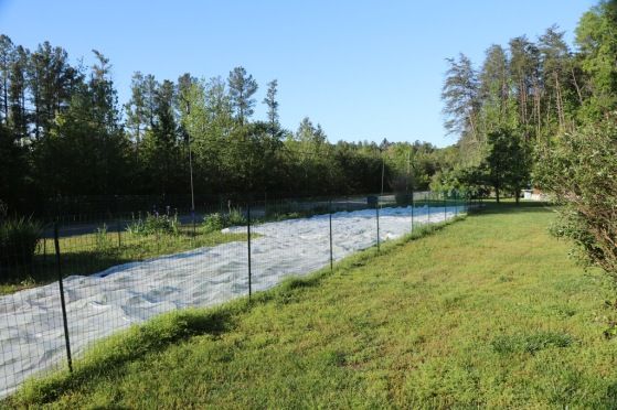 covering the gardens to protect against frost