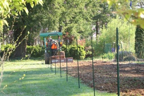 tilling the wildflower garden